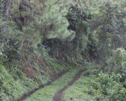Forest Usultan coffeefarm